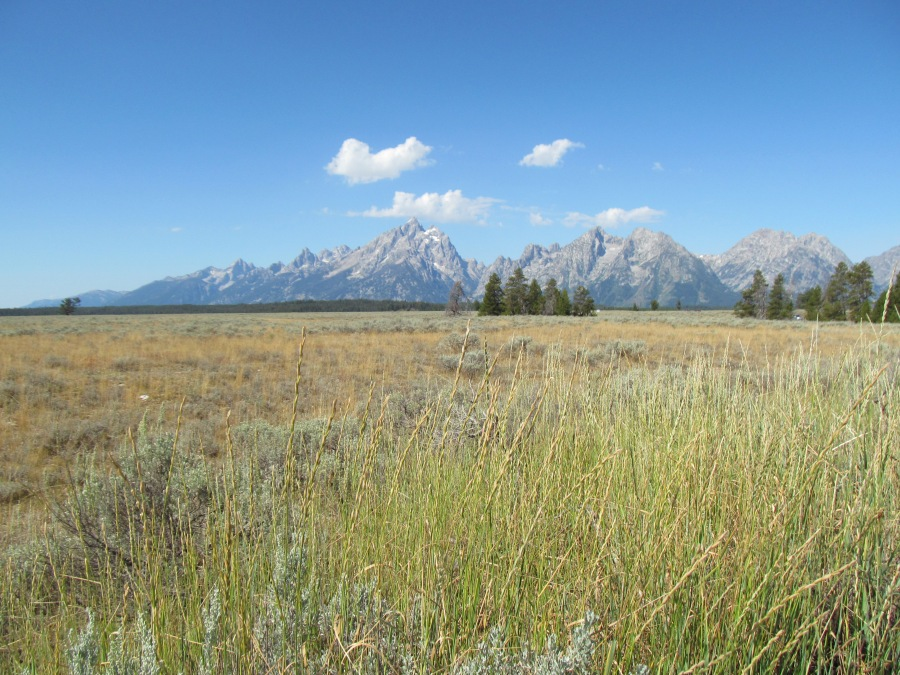 2015_08_01_Yellowstone_Tetons_08_15_15_4481